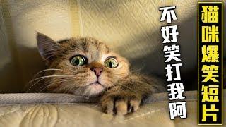 貓咪爆笑短片集,不好笑給你跪了~