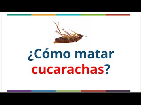 C mo matar cucarachas remedios caseros como terminar o - Remedios para eliminar cucarachas ...