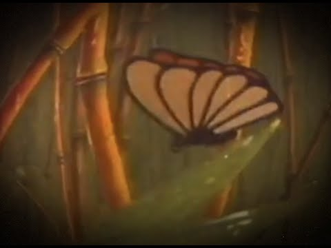 Johnny Stimson – Butterflies