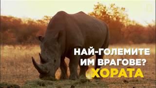 National Geographic - Световен ден на носорога - 22 септември