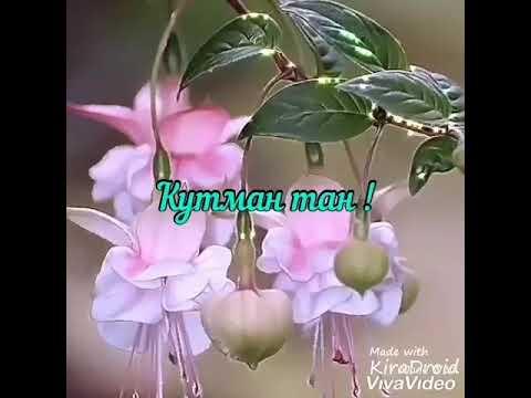 Кутман тан