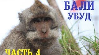 2 недели в РАЮ путешествие НЕпакетного туриста Бали Убуд Лес Обезьян