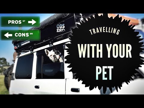 Pros and cons of travelling with your pet