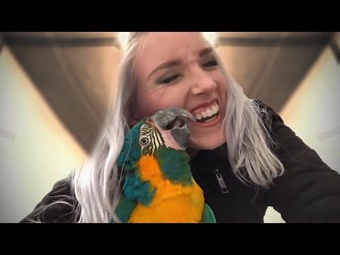 PLAYTIME WITH MY PARROTS! | Training My Macaw to Go On His Back