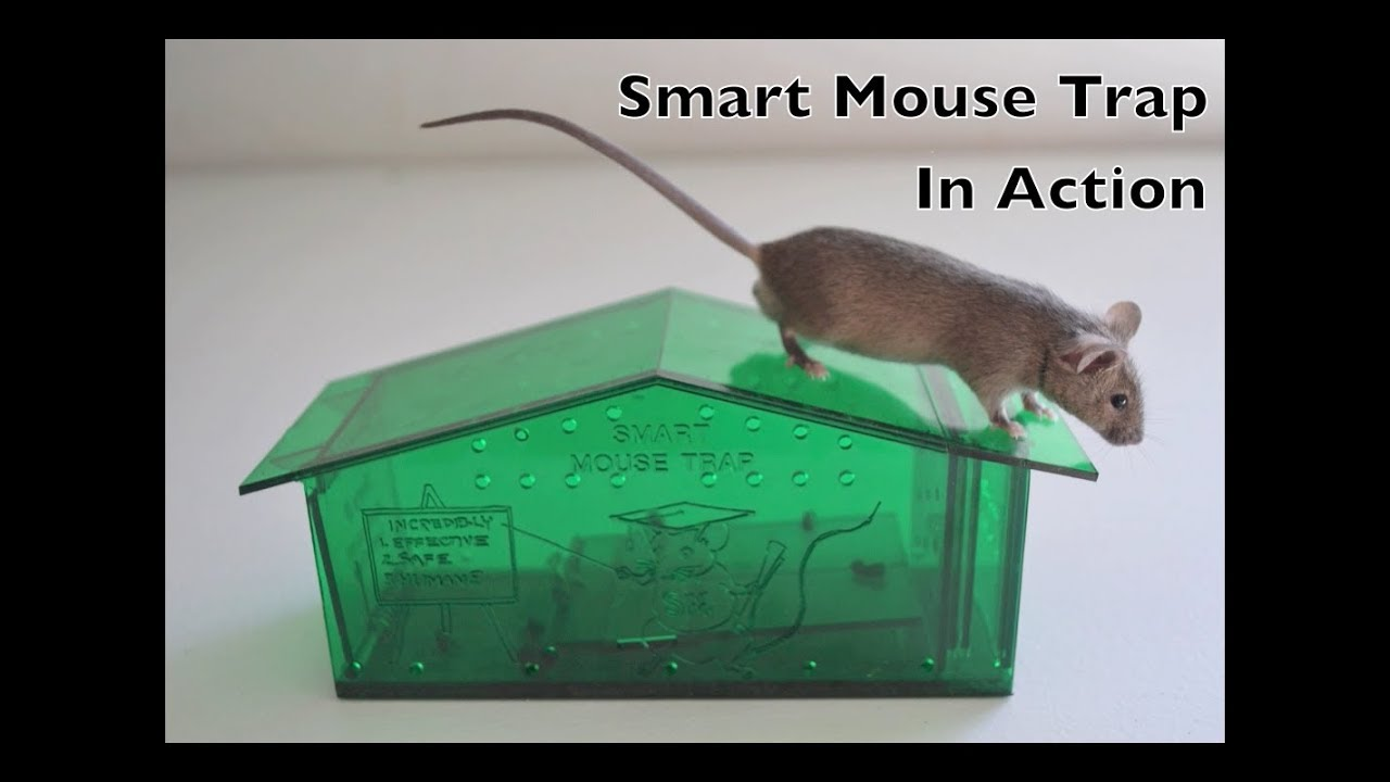 smart mouse trap in action humane live catch mouse trap. Black Bedroom Furniture Sets. Home Design Ideas
