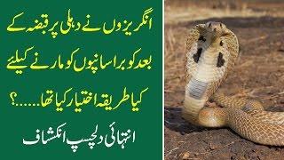 Angraizoun Ny Dilli Per Qabza K Baad Cobra Snake Ko Marne K Liye Kya Tarika Iktiar Kia