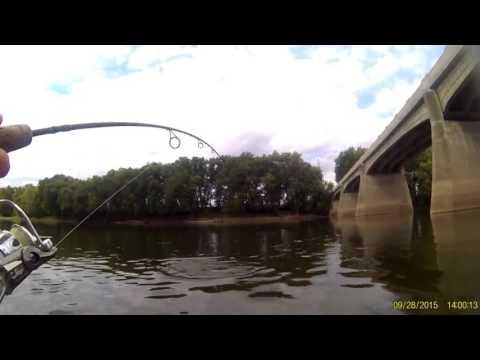 Freshwater Drum on the Wabash River, Indiana