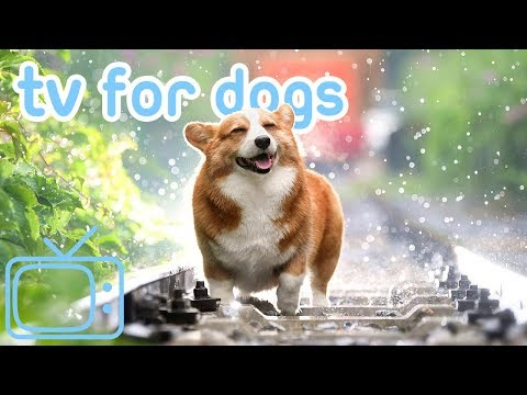 TV For Dogs! Chill Your Dog TV With Cats, Dogs And Nature! NEW 2019!