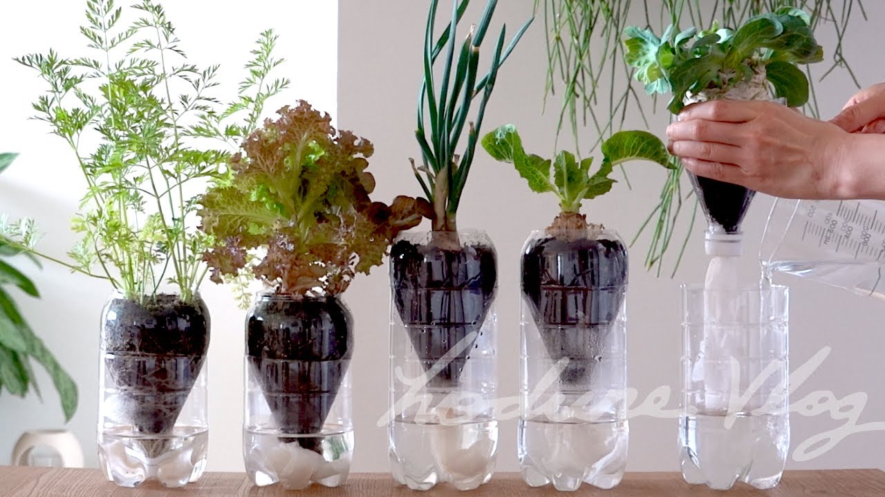Siembra de algunos vegetales comprados en el mercado | Con sistema de auto regado