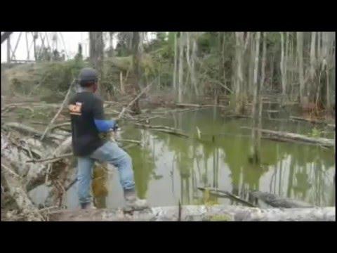 Mancing Mania Casting Ikan Gabus Di Danau Rawa-Rawa Penuh Pohon Kering ~ Hutan