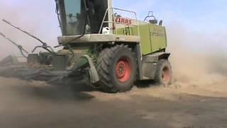 видео Сорго на зерно, силос и зелёный корм. Курская область. Центрально-чернозёмный район