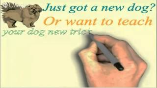 Online Dog Or Puppy Training For Your Jack Russell Terrier