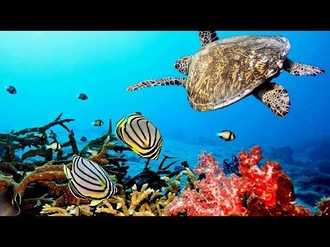 Beautiful  Nature Coral Reef life - Sea Turtle Shark  -  Sleep and Relax  Screensaver