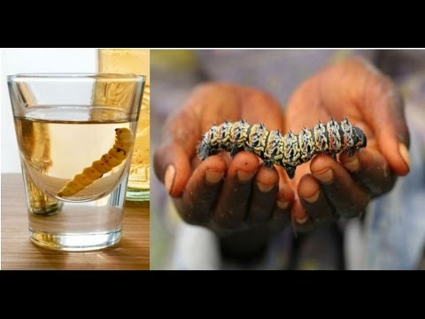 worm in tequila things you never knew about tequila youtube
