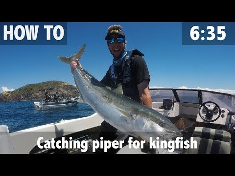 Catching Piper For Kingfish