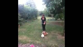 The Chicken Killer