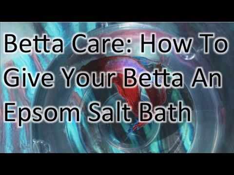 Betta Care: How To Give Your Betta Fish An Epsom Salt Bath
