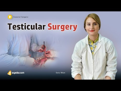 Testicular Surgery | Medical Online Education | Video Lectures | Doctors | V-Learning