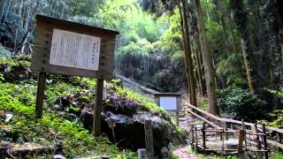 和歌山県海南市藤白で海南IC下りてすぐ。樹齢1000年を越える樟が見事で...