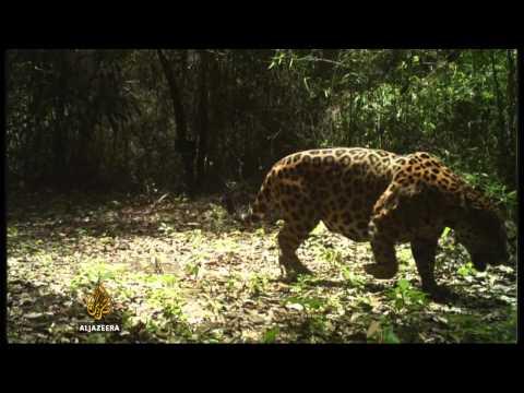 Ecuador's thirst for oil threatens wildlife