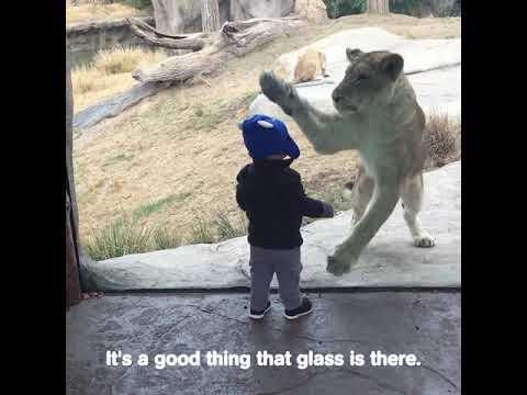 Who's Wilder Animals Or Kids 🐨🐯🐍🐻🐢🐒  | IB Videos