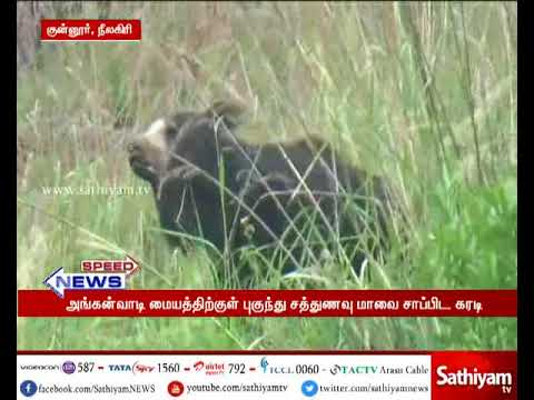 Shocking in Anganwadi Center near Coonoor as bear came to eat  Nutrient flour