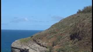 (Warning: loud wind noise) Red Tailed Tropic Birds May 1 2013