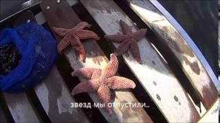 видео море белое