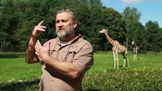 ZOObacz co w Warszawskim ZOO - odc. 8 - Żyrafy