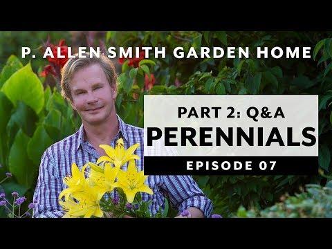 Perennials 2 | Companion Planting | Q&A: Garden Home Vlog (2019) 4K