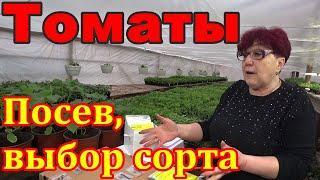 Томаты Как выбрать что посеять Разговор о гибридах томатов и что сеем мы