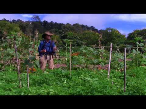 #15 What if we change - Perennial Paradise - Zaytuna Farm