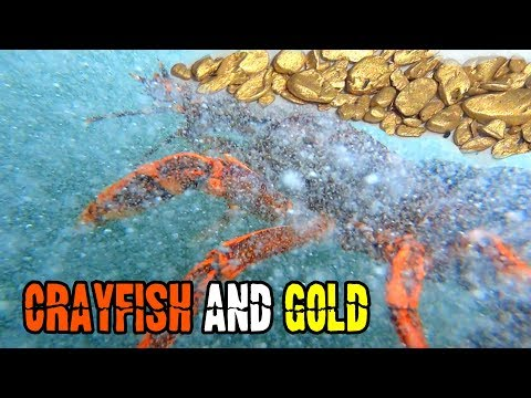 Sniping GOLD Pickers And Freediving For Rock Lobster And Abalone