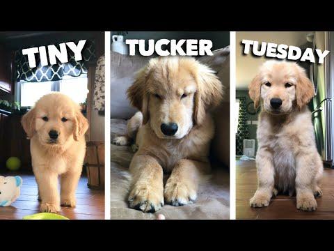 Tiny Tucker Tuesday | Compilation