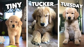 Tiny Tucker Tuesday | Compilation
