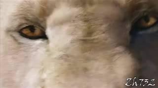 """Мифические существа   """"Centuries"""" клип"""
