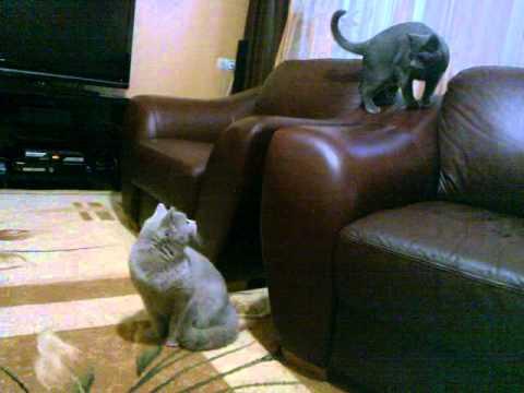 знакомство взрослых котов