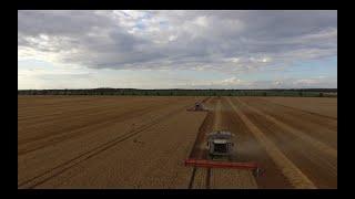 Żniwa pszenicy 2019 w GR.Wawrzyniak|2x Claas lexion 770 TT