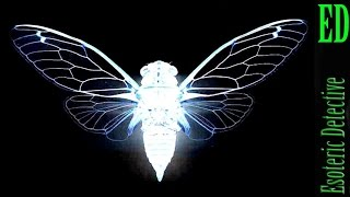 6 Things We Know about Cicada 3301