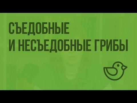 Ядовитые грибы России: фото, названия