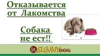 Собака плохо ест во время дрессировки? отказывается от лакомства?(Бесплатный курс по дрессировки = http://sunny.dog/ - пошаговые бесплатные уроки по дрессировке собаки! Что делать..., 2016-05-03T14:08:12.000Z)