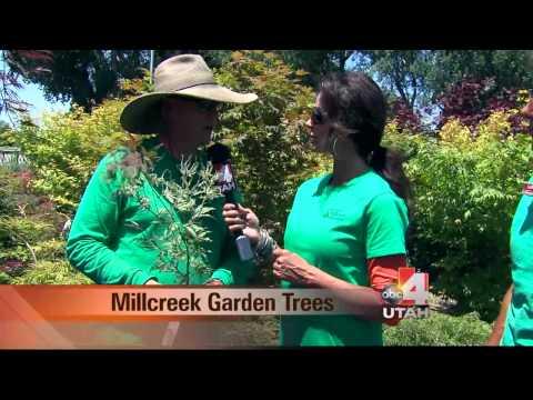 Millcreek Garden Trees Salt Lake City Utah