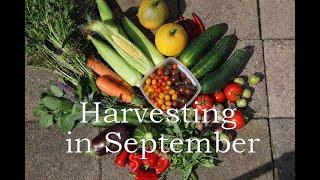 Harvesting in September