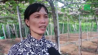 VTC14 | Ninh Thuận: Khỉ xuống núi phá hoa màu, tấn công người dân