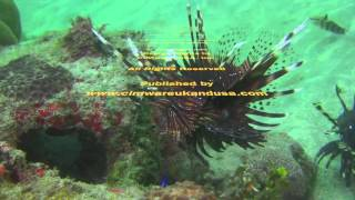 Bali Dive Safari Island Tracking Paul Ranky Copyright VideoClip15