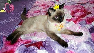Утренний релакс с котом. Подарок от кота Тима.