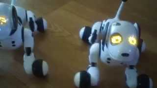 Both Of My Zoomer Robot Dogs Doing Most Tricks