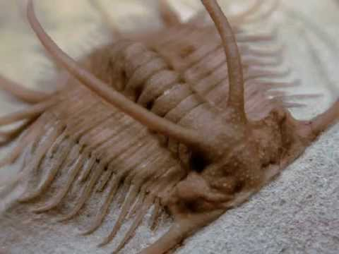 dating trilobites