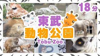 東武動物公園に行きました ホワイトタイガー ぞう きりん ペンギン 2020年