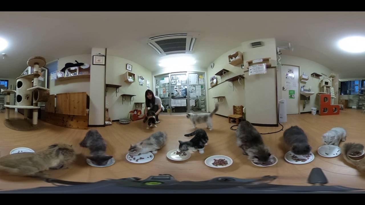 【360度動画】茅ヶ崎の猫カフェで猫のお食事時間撮ってみた!【ねこのすみか】